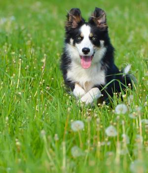 Freizeitaktivitäten im Urlaub mit Hund in Niedersachsen