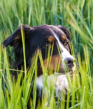 Freizeitaktivitäten im Urlaub mit Hund in Hessen