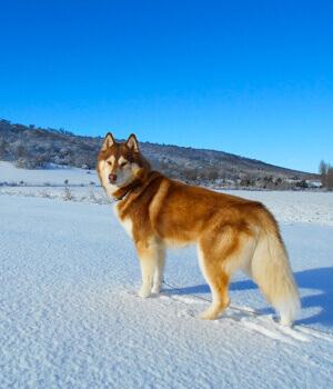 Freizeitspaß im Urlaub mit Hund in Bodenmais