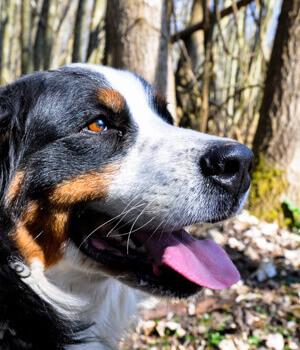 Natur erleben im Urlaub mit Hund im Bregenzerwald