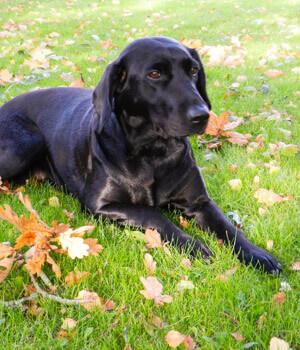 Urlaub mit Hund im Westerwald