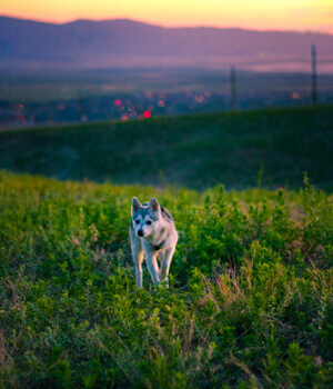Natur erleben im Urlaub mit Hund im Westerwald