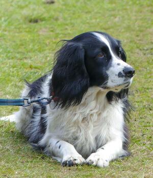 Freizeitspaß im Urlaub mit Hund im Westerwald