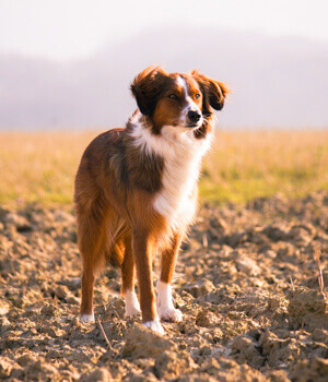 Urlaub mit Hund im Burgenland