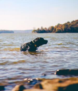 Natur erleben im Urlaub mit Hund im Burgenland
