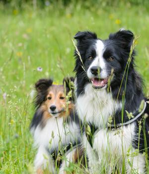 Urlaub mit Hund in Dresden