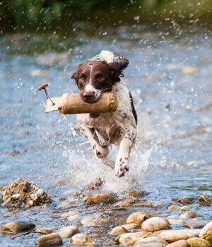 Natur erleben im Urlaub mit Hund in Dresden