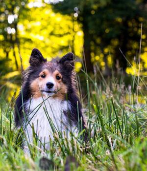 Natur erleben im Urlaub mit Hund im Erzgebirge