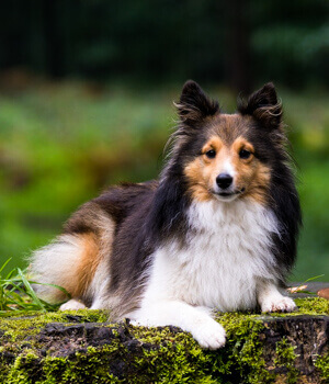 Urlaub mit Hund im Hunsrück