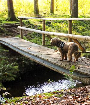 Freizeitaktivitäten im Urlaub mit Hund im Hunsrück
