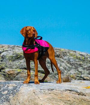 Freizeitspaß im Urlaub mit Hund in Kärnten