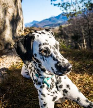 Freizeitspaß im Urlaub mit Hund im Kleinwalsertal