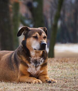 Freizeitspaß im Urlaub mit Hund in Köln