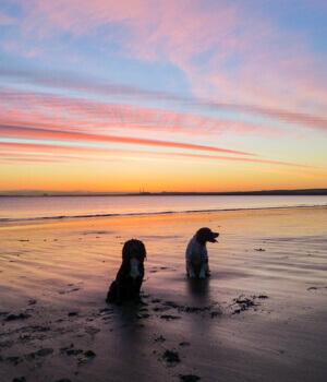 Urlaub mit hund auf norderney online bei hrs holidays for Ferien auf juist mit hund