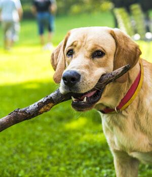 Urlaub mit Hund in Nordrhein-Westfalen