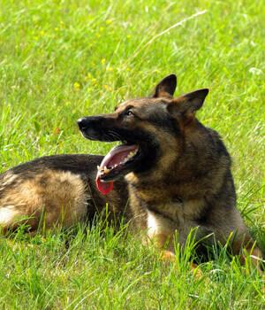 Natur erleben im Urlaub mit Hund in Nordrhein-Westfalen