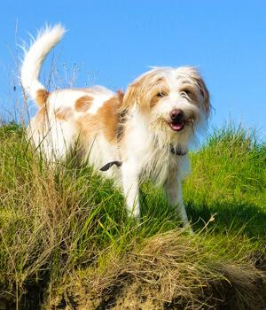 Urlaub mit hund auf den ostfriesischen inseln online bei for Urlaub mit hund auf juist