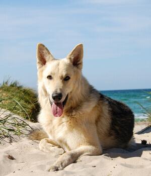 urlaub mit hund auf den ostfriesischen inseln online bei hrs holidays schnell und g nstig buchen