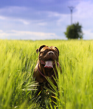 Natur erleben im Urlaub mit Hund in Potsdam