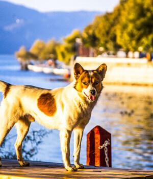 Freizeitspaß im Urlaub mit Hund in Potsdam