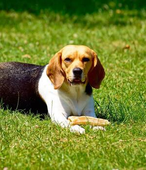 Urlaub mit Hund in Potsdam