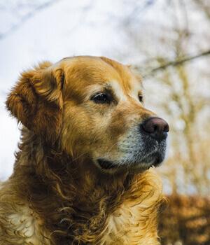 Urlaub mit Hund im Salzburger Land