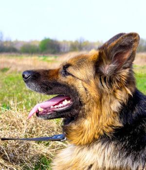 Natur erleben im Urlaub mit Hund in Spessart