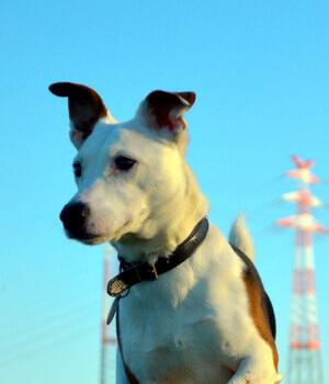 Urlaub mit Hund in Stralsund