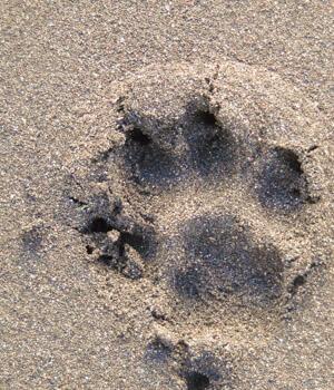 Natur erleben im Urlaub mit Hund in Stralsund
