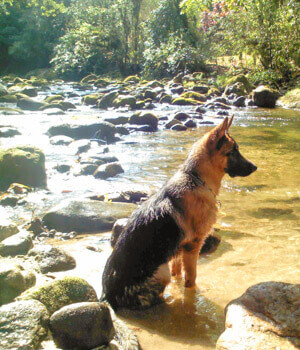 Freizeitspaß im Urlaub mit Hund in Tirol