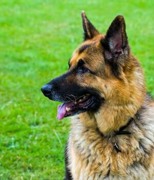 Urlaub mit Hund in Vorarlberg