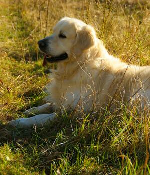 Natur erleben im Urlaub mit Hund in Wien