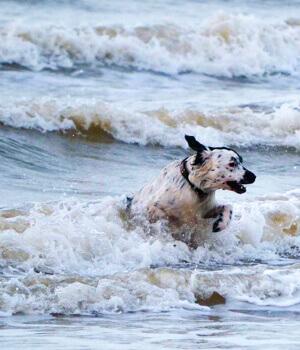 Urlaub mit hund in wyk auf f hr online bei hrs holidays for Ferien auf juist mit hund