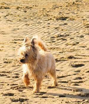Urlaub mit hund in wyk auf f hr online bei hrs holidays schnell und g nstig buchen for Urlaub auf juist mit hund