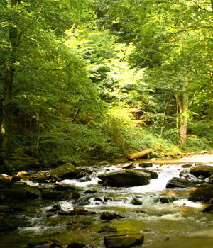 Wanderurlaub für die Gesundheit im Schwarzwald