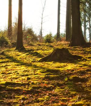 Wanderurlaub mit Abenteuern im Bayerischen Wald