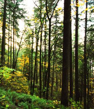 Natur genießen im Wanderurlaub im Bayerischen Wald